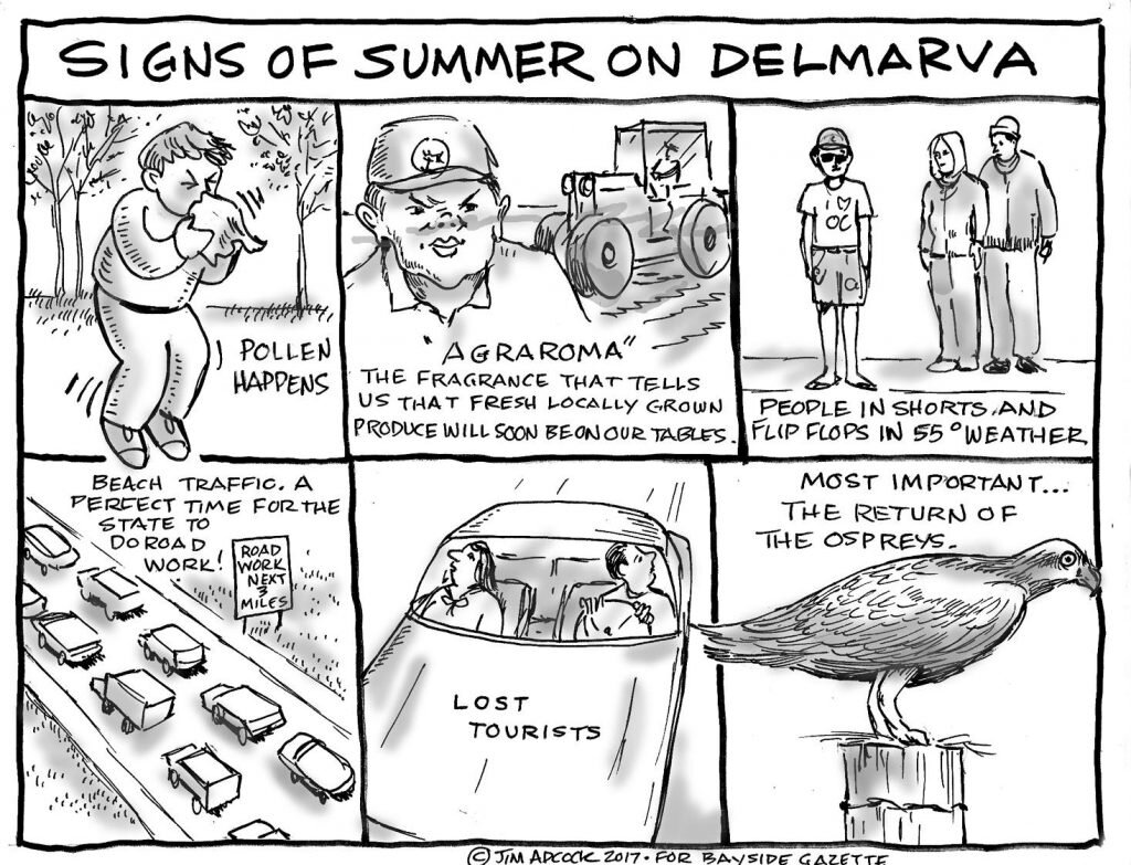black and white comic summer on delmarva